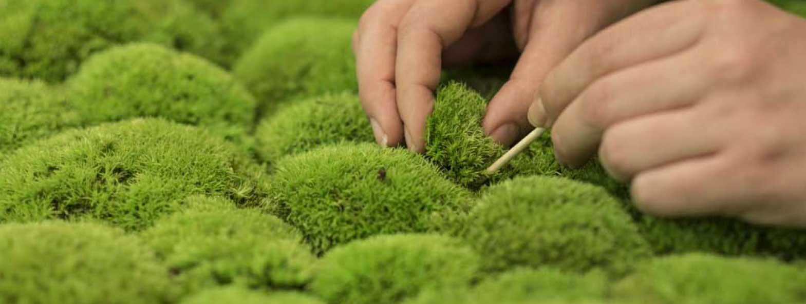 Uitgelezene DIY Moss – make your own moss panel — Mosmuur HZ-13