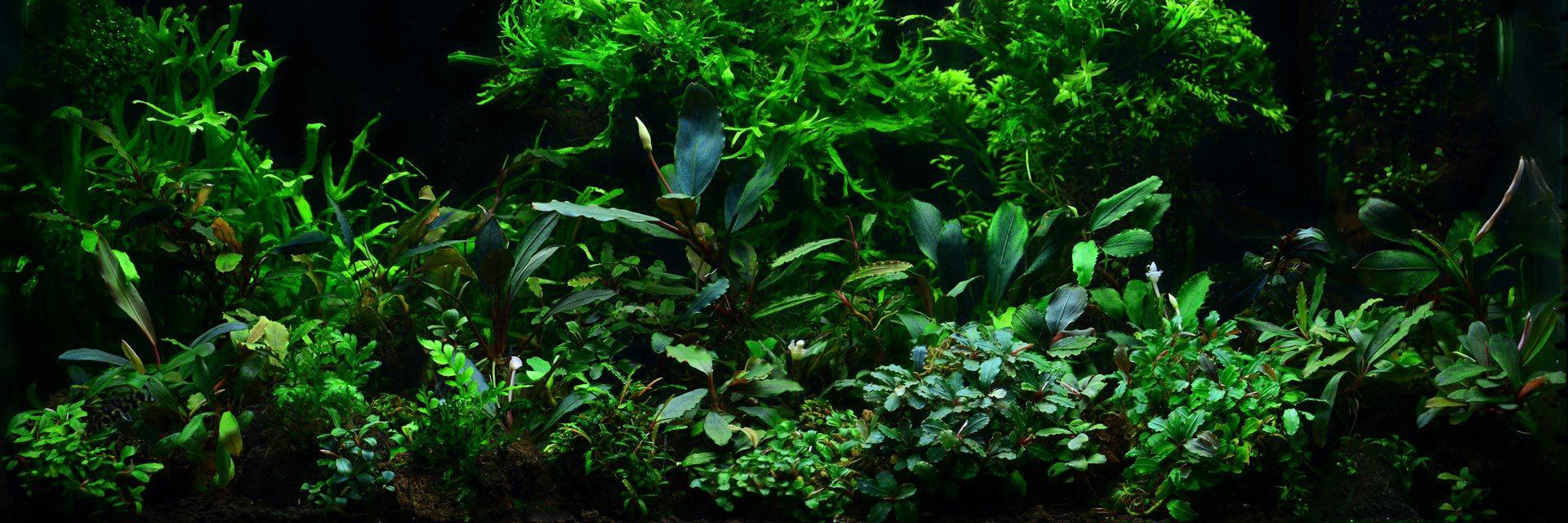 Een NADA aquascape
